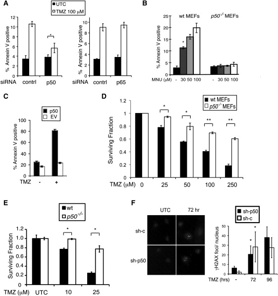 p50 (NF-κB1) Is an Effector Protein in the Cytotoxic Response to DNA