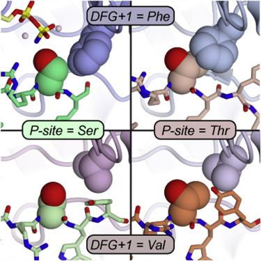 Identification of a Major Determinant for Serine-Threonine