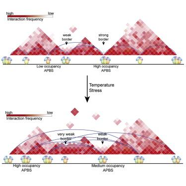 Widespread Rearrangement of 3D Chromatin Organization Underlies