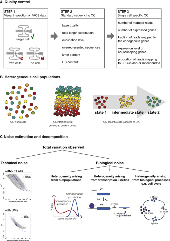 The Technology and Biology of Single-Cell RNA Sequencing