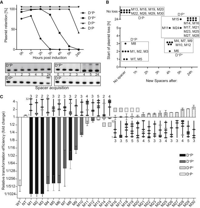 Cas3 Derived Target Dna Degradation Fragments Fuel Primed Crispr