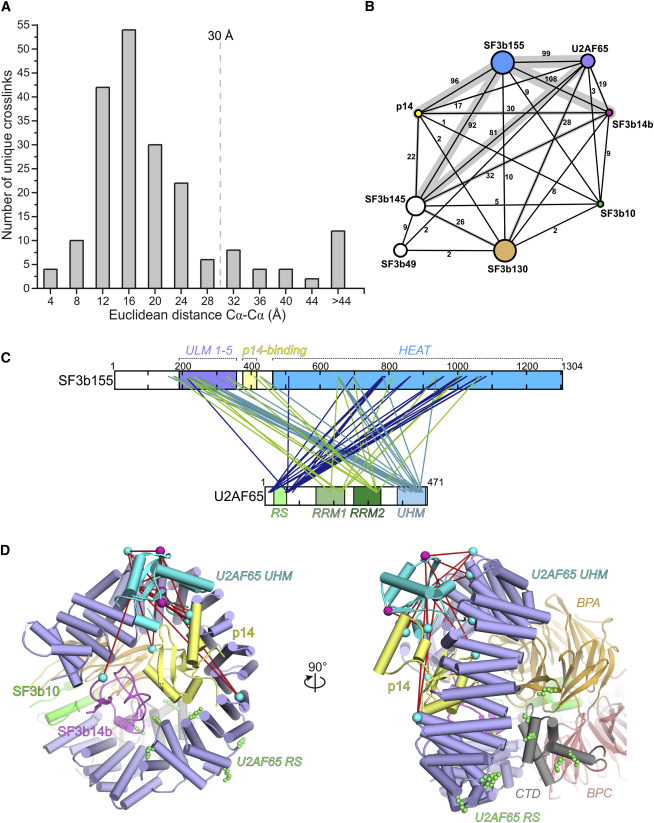 Molecular Architecture of SF3b and Structural Consequences