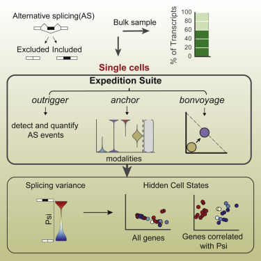 Single-Cell Alternative Splicing Analysis with Expedition