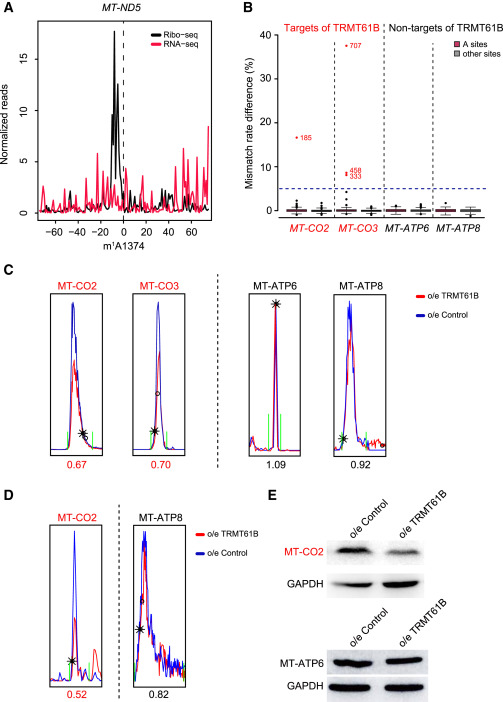 Base-Resolution Mapping Reveals Distinct m1A Methylome in