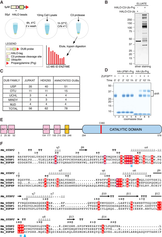 Discovery and Characterization of ZUFSP/ZUP1, a Distinct