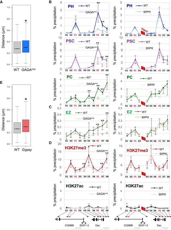 Polycomb-Dependent Chromatin Looping Contributes to Gene Silencing ...
