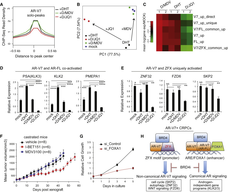 ZFX Mediates Non-canonical Oncogenic Functions of the Androgen