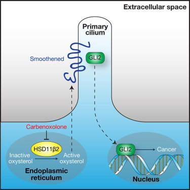 Cilia Associated Oxysterols Activate Smoothened ScienceDirect