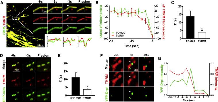 Drp1-Zip1 Interaction Regulates Mitochondrial Quality Surveillance