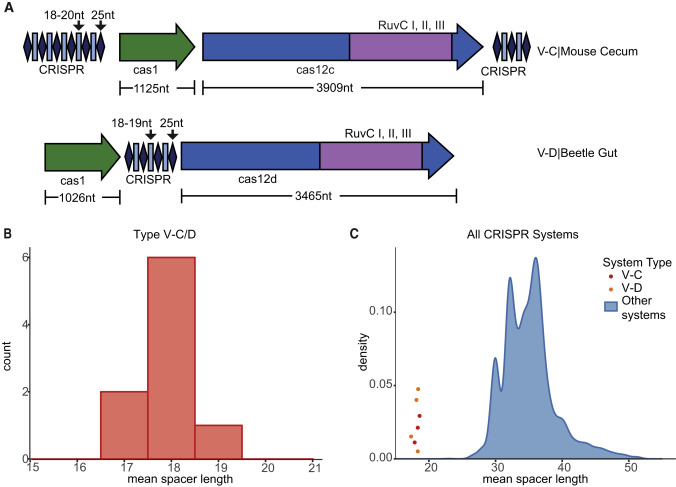 A Functional Mini-Integrase in a Two-Protein Type V-C CRISPR