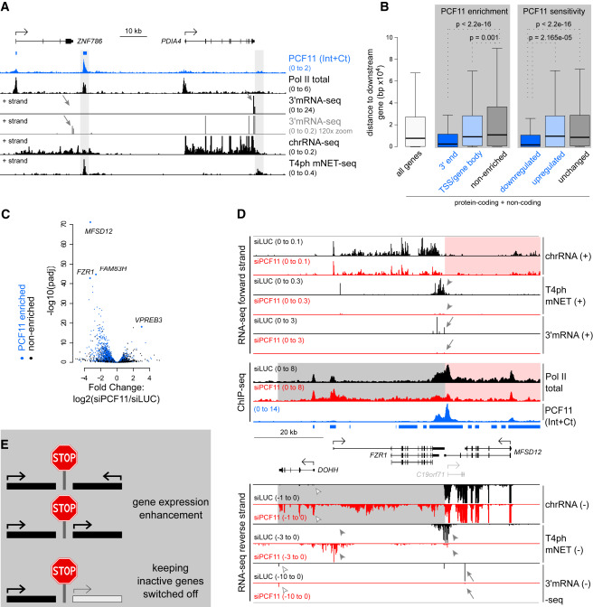 Selective Roles of Vertebrate PCF11 in Premature and Full