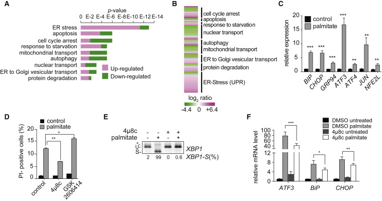 Probing the Global Cellular Responses to Lipotoxicity Caused