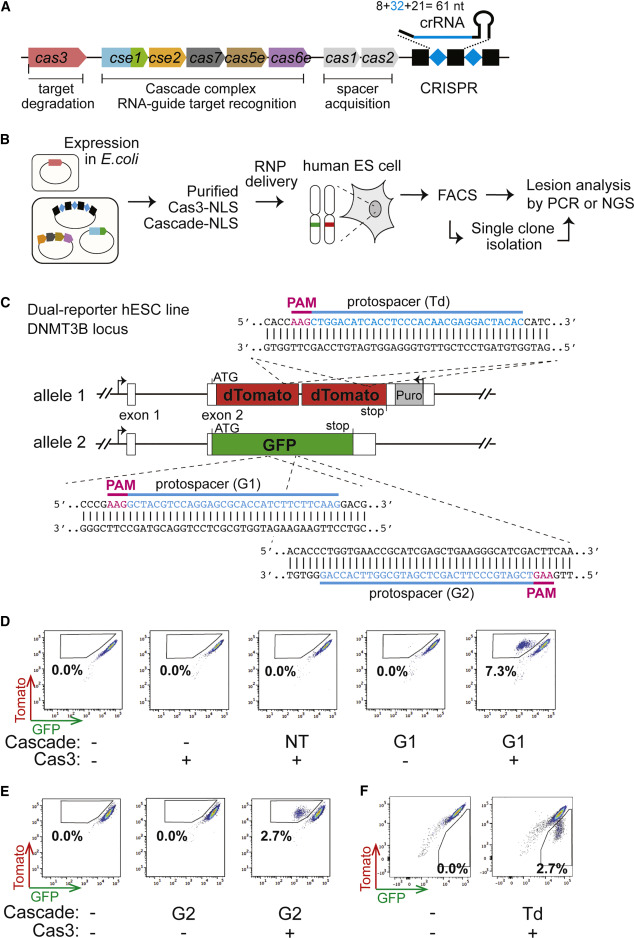 Introducing a Spectrum of Long-Range Genomic Deletions in