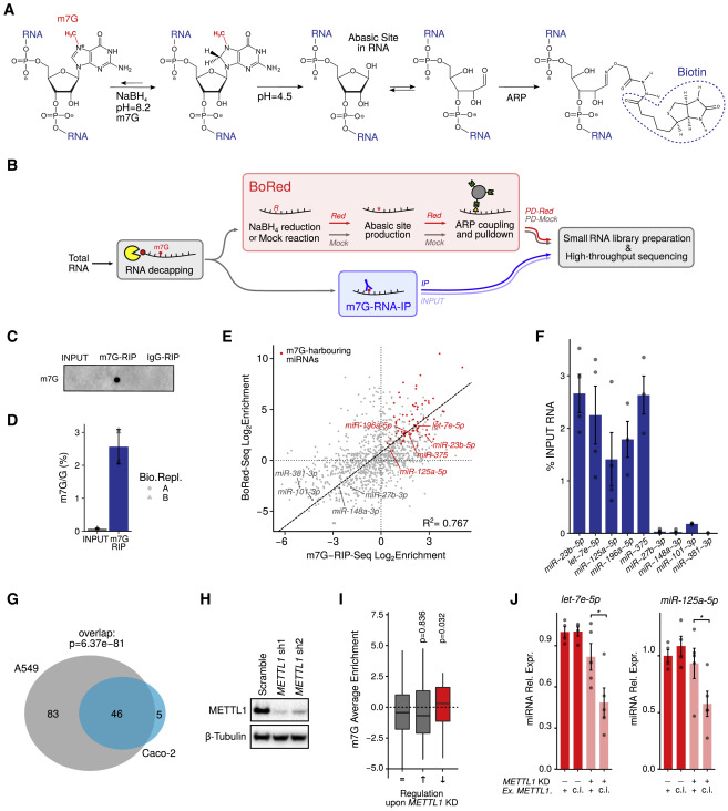 METTL1 Promotes let-7 MicroRNA Processing via m7G
