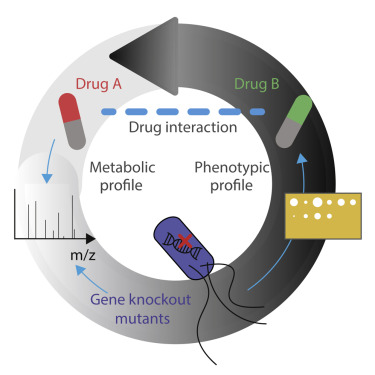 Metabolomics-Driven Exploration of the Chemical Drug Space