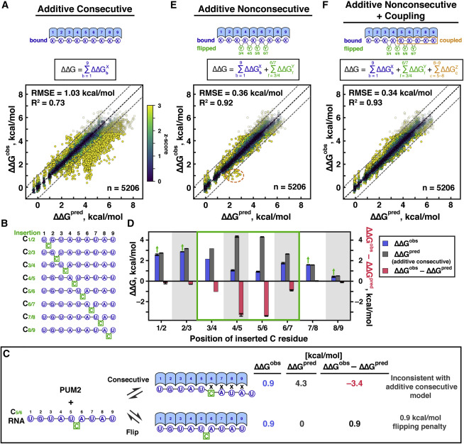 A Quantitative and Predictive Model for RNA Binding by Human