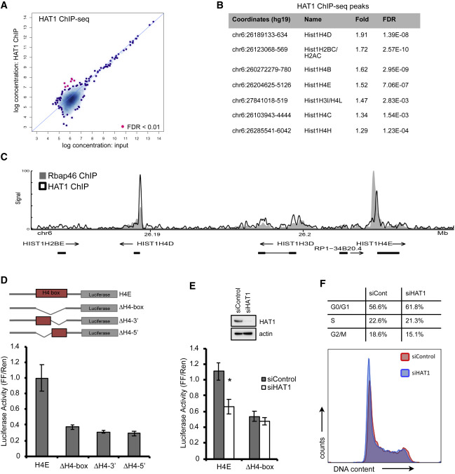 HAT1 Coordinates Histone Production and Acetylation via H4