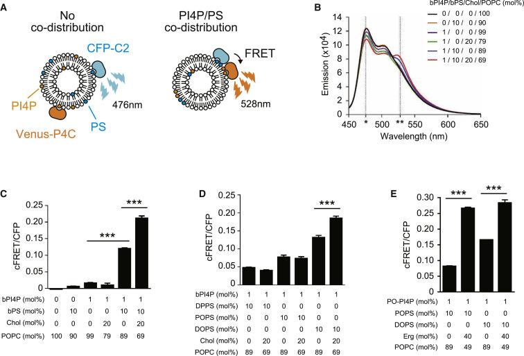 Osh Proteins Control Nanoscale Lipid Organization Necessary