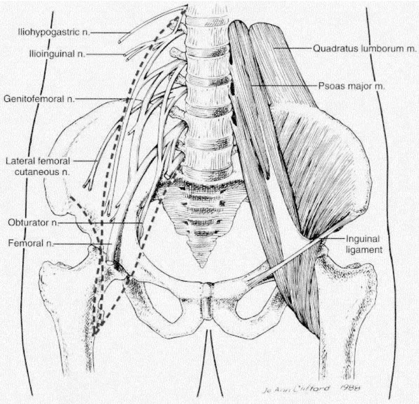 Posterior lumbar plexus block: Anatomy, approaches, and techniques ...