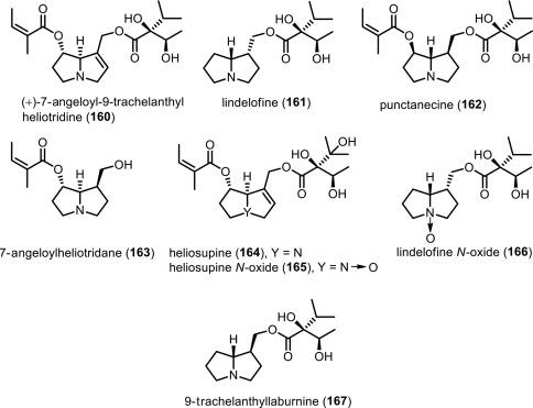 19d6ce1a3c7c Pyrrolizidine Alkaloids - ScienceDirect