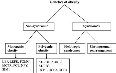 Genetics Of Obesity Sciencedirect