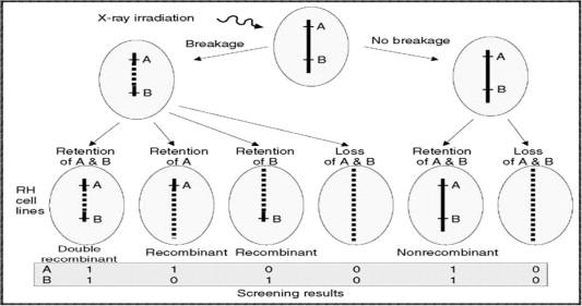 Formal genetic maps - ScienceDirect on