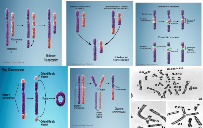 structural chromosomal aberrations