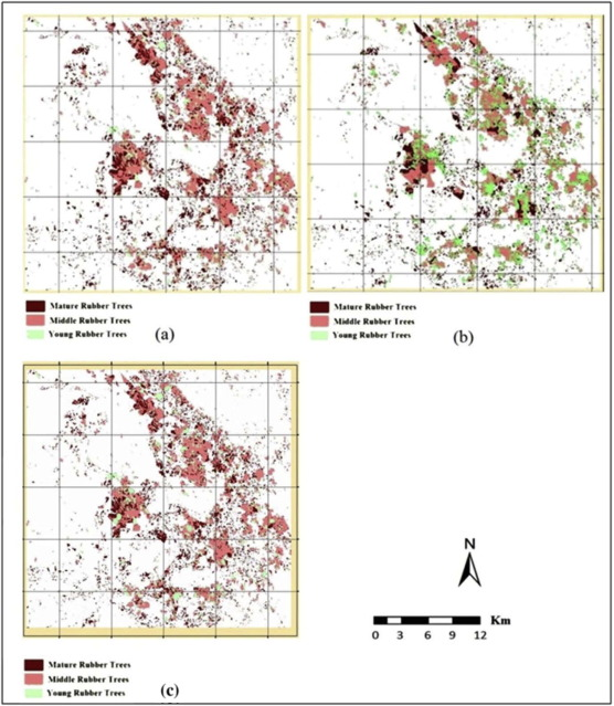 Hierarchical classification approach for mapping rubber tree