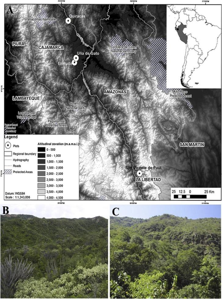 Wood Anatomy And Growth Rate Of Seasonally Dry Tropical