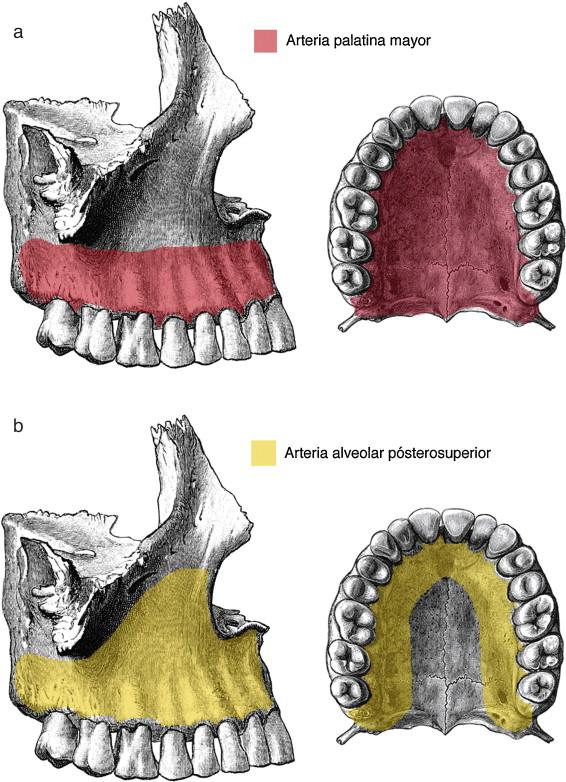 Complicaciones quirúrgicas de la cirugía ortognática: presentación ...