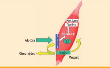 los factores de transferencia curan la diabetes