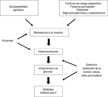 diabetes tipo 1 prevalencia australiana versus incidencia