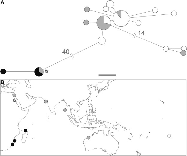 Comparative Phylogeography Of The Western Indian Ocean Reef Fauna