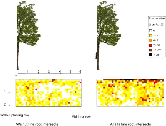 Effects of walnut trees on biological nitrogen fixation and