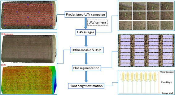 Estimation of plant height using a high throughput