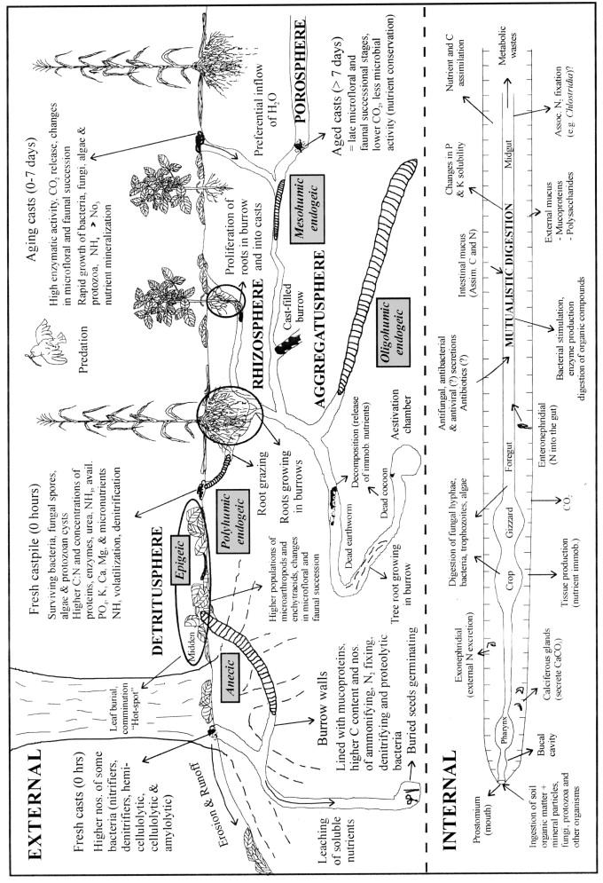 Regulation of soil organic matter dynamics and microbial activityin ...