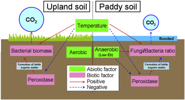 effects of biotic and abiotic factors on soil organic matter