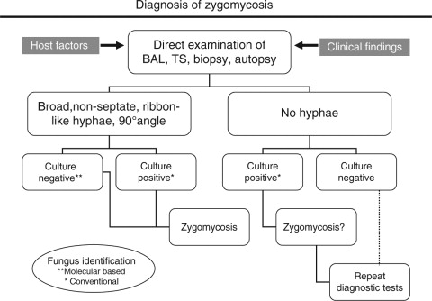 Zygomycosis conventional laboratory diagnosis ScienceDirect