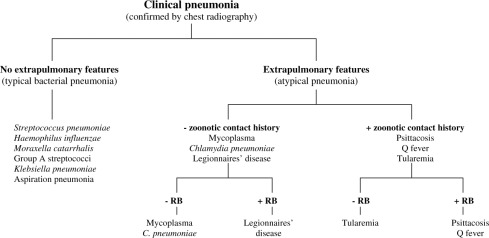 The atypical pneumonias: clinical diagnosis and importance