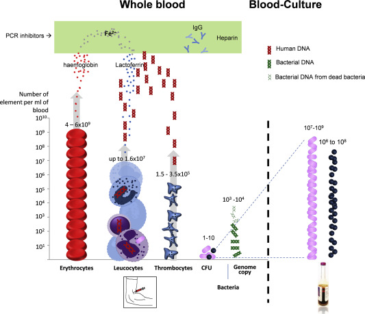 Microbial diagnosis of bloodstream infection: towards