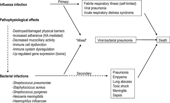 Epidemiology Microbiology And Treatment Considerations For - Pneumonia map us 201