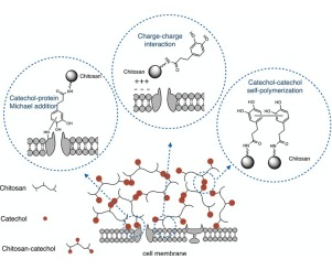 Molecular shielding of porcine islets by tissue-adhesive