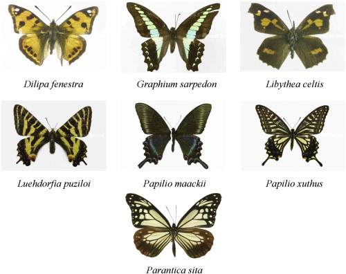 identification of butterfly species with a single neural network