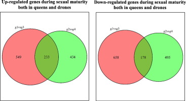 Maturation definition statistics of sexual immorality