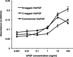 Production of a biologically active human basic fibroblast