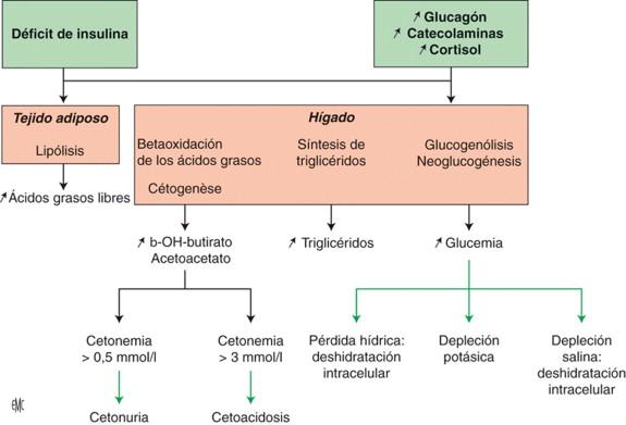 diabetes de glucoquinasa en 103 familias son para siempre