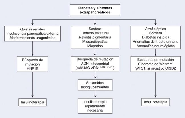 La disfunción mitocondrial y los medicamentos dirigidos se centran en la diabetes