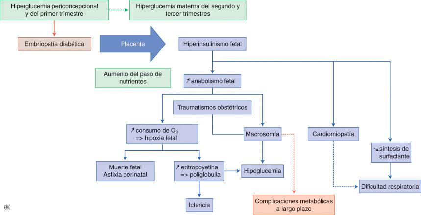 Diagrama fisiopatológico del paladar hendido de la diabetes