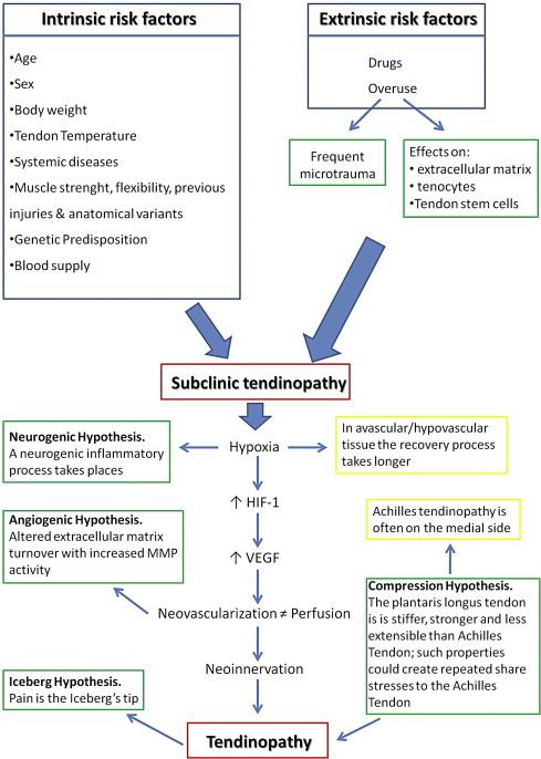 Teniosis zoonosis