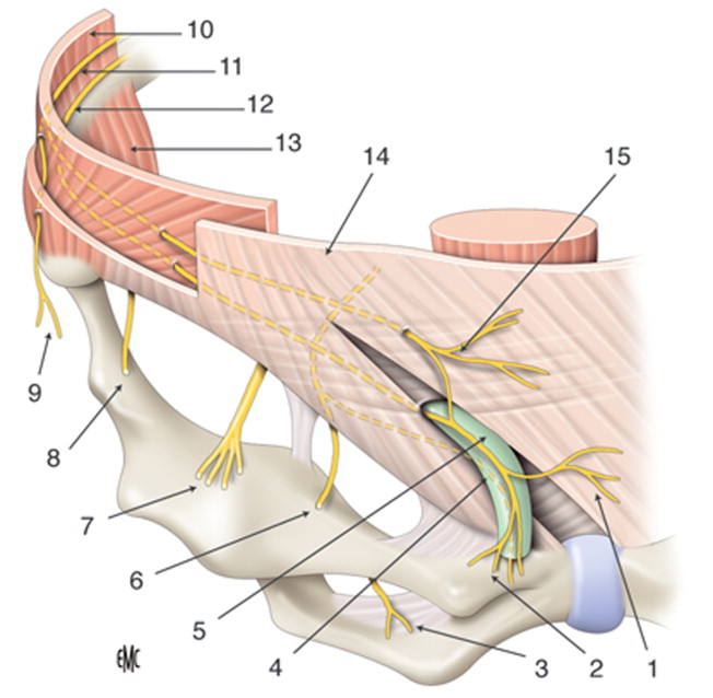 Bloqueos de la pared abdominal - ScienceDirect